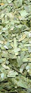 Ginkgoblätter geschnitten